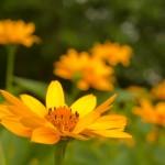 Ziedonis Kārkliņš ārstniecības augi